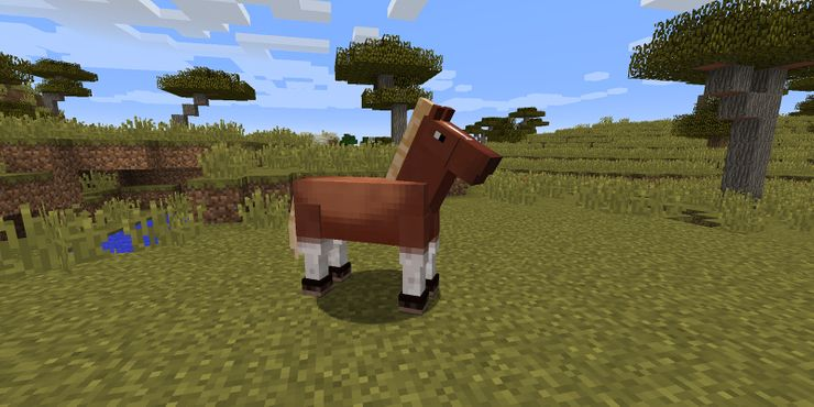 Type of Horse